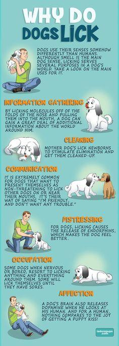 Why Do Dogs Lick Your Face? - I adore pups.com