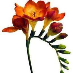 orange flowers for wedding