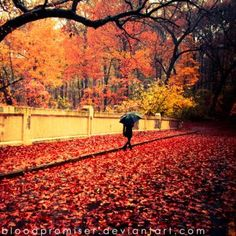 DeviantArt: More Collections Like Autumn Leaves by adeb1113