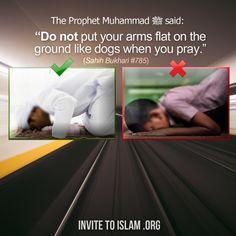 """invitetoislam: Le Prophète (paix et bénédictions d'Allah soient sur lui) a dit: «Priez comme vous me avez vu prier."""" Rapporté par al-Bukhari.  Ce est adressée aux deux hommes et une femme.  Cheikh al-Albani (Puisse Allah lui accorder Sa miséricorde) a dit: Tout ce que nous avons dit plus haut à propos de la façon dont le Prophète (paix et bénédictions d'Allah soient sur lui) a prié applique également aux hommes et aux femmes.  Il n'y a rien rapporté dans la Sunna qui implique que les femmes…"""