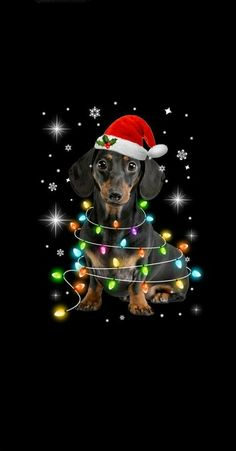 Merry Christmas Dog, Christmas And New Year, All Things Christmas, Winter Christmas, Photo Images, Tatty Teddy, Four Legged, Belle Photo, Special Day