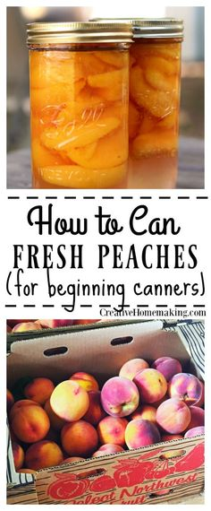 If you have never canned before, you might want to start by canning something easy, like fresh peaches! Easy recipe for canning peaches, includes how to can peaches in light syrup or in water with no sugar. Great canning recipe for beginners! Canning Peaches, Canning Pickles, Canning Tips, Home Canning, Canning Recipes, Pickled Peaches, Canning Food Preservation, Preserving Food, Preserving Peaches