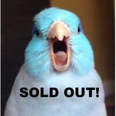Oh my goodness the JUNE Squawk Box is sold out!  but don't worry- we'll reopen our birdy subscription store for July boxes  stay tuned and for those who have ordered we are excited to ship your box!  (photo credit (without text): @lifeofblu  the cutest  ). ________________________ #squawkbox #subscriptionbox #birdtreats #birdtoys #parrotsofinstagram #parrot #petstagram #squawkboxclub #petbox #supportrescues by squawk.box http://www.australiaunwrapped.com/