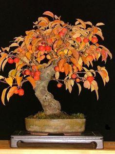macieira com folhas e frutos