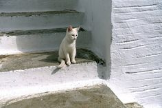 Cat and steps | Flickr - Photo Sharing!