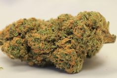 Northern Lights - INDICA - Few strains come with as much widespread renown as Northern Lights, inarguably one of the most popular strains of all time. An inbred descendant of original Afghani landrace strains, Northern Lights is a near-pure indica, with a sativa/indica ratio of 5:95. THC levels can reach 26%, making this one of the most potent strains available on any market. Learn more: https://www.allbud.com/marijuana-strains/indica/northern-lights
