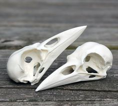 resin crow skull replica by skullery on Etsy