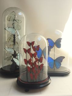 Brudante Mix, Cymothoe Sangaris, Morpho Didius, Morpho Catenarius, Blue Morpho, Glass Globe, Glass dome