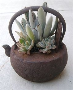 Dramatic living succulent arrangement in JAPANESE IRON TEAPOT for your home or patio. Each succulent design can be arranged to fit the size, color  style of its container so that it will be unique!!