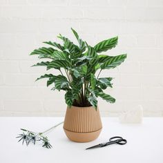 Pleated Earthenware Planter by Umbra Shift