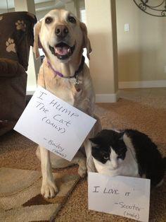 Dog Shame | I hump the cat (daily). I like it!