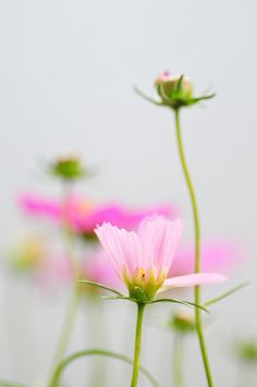 blooms-and-shrooms:  1335 by poesie on Flickr.