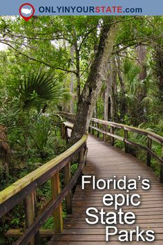 Travel Florida Attractions East Coast USA State Parks Natural Beauty Outdoors Day Trips Things To Do Explore Wildlife Places To Visit Tampa Manatees Bluffs Natural Wonders Hidden Gems St. Places In Florida, Visit Florida, Florida Living, Tampa Florida, Florida Vacation, Florida Travel, Florida Beaches, Florida Trips, Florida Style