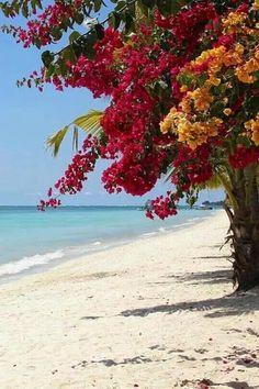 Bougainvillea on the Beach / Mauritius The Beach, Ocean Beach, Paradis Tropical, Tropical Paradise, Mauritius, Belle Photo, Beautiful Beaches, Beautiful World, Scenery