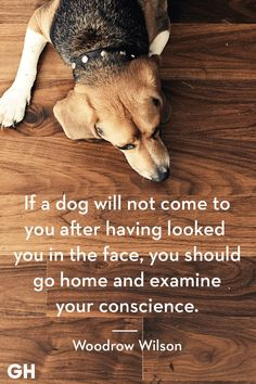 Dogs are amazing pets for many reasons, but sometimes it's hard to put into words why they're man's best friend. Scroll through these cute and funny dog quotes to explain why you love your pup so much. Best Dog Quotes, Puppy Quotes, Dog Quotes Love, Dog Quotes Funny, Animal Quotes, Funny Dogs, Cute Dogs, Dachshund Quotes, Beagle Facts