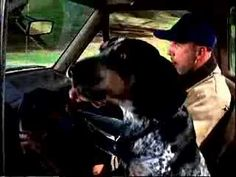 Carfax Commercial - Dog - YouTube