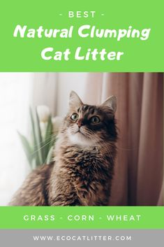 Which is the BEST natural cat litter that clumps? We compare the pros and cons of four types of natural clumping litter to find out! Natural Cat Litter, Best Cat Litter, Automatic Litter Box, Clumping Cat Litter, Three Cats, Grass Seed, Cool Cats, Biodegradable Products, Cats And Kittens