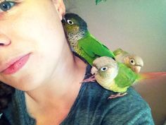 Cute green cheek #conures! By: Annie Gavin