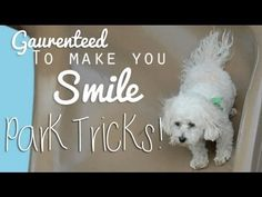 """How about this precious pooch named """"Sparky"""" and his little tricks at the park. Adorable!"""