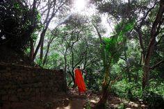 SRI  LANKA - Moine bouddhiste dans le jardin d'un monastère sur les hauteurs de Ella
