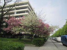 Ruhige, sonnige, kleine  und möblierte Wohnung - Wohnung in München-Sendling