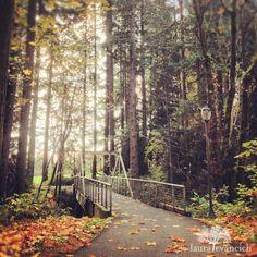 Autumn path, Vancouver, Washington