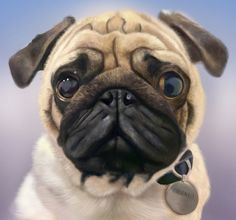 Pug Portrait by Jo Denning. Digital painting created using Photoshop and a Wacom tablet.