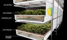 aerofarms vertical farm sprouts