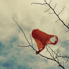 23: bag orange plastic sky tree - brinjal