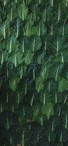 dark green♫ ♥ X ღɱɧღ ❤ ~ Tues Dec 2014 Emerald Green, Blue Green, Emerald Colour, Fractal, Plant Leaves, Cabbage Leaves, Green Cabbage, Green Leaves, Backgrounds