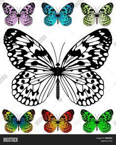 Plantilla de mariposa