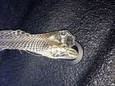 This is a second shot of the snake's skin. You can see exactly where his eye sockets used to be!