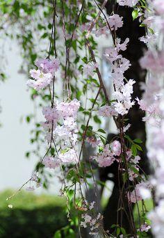 In The Garden- All That Is Beautiful  Garden Flowers   Serafini Amelia