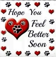 Get Well Prayers, Prayers For Hope, Sending Prayers, Get Well Wishes, Prayers For Healing, Pet Quotes Dog, Animal Quotes, Dog Sayings, Get Well Funny