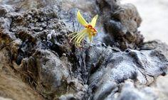 Miniature Fall Flower on a piece of driftwood
