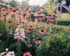 You will love this site with hundreds of photos and tons of information. Flowers growing alongside boxwoods in the garden