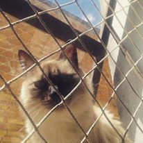 Fuck the system! #Tonks #GatíssimosHor #Gatos #Siamês #FucktheSystem #Pet #Animals #Catlove #Siamese #Instacat #Catlovers #Miau #Meow #Katze #Chat #kat