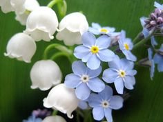 Image result for lily of the valley and forget me nots