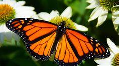 Grow a Year-Round Wildlife Habitat Garden (Zone 9 – – Grow Beautifully