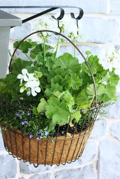 StoneGable's potting bench; bracket on side holding white geraniums in a wire egg basket with purple lobelia.