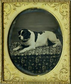 Simply Masterful Minty Daguerreotype of a Beautiful Dog on a Flowery Platform! - Daguerreotype Roxy!