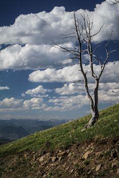 Yellowstone by Preston