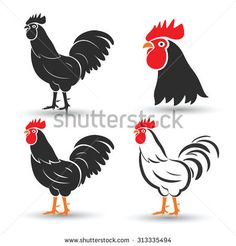 Chicken and cock hand drawn sketch on white background, vector illustration