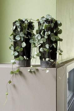 5 plantes pour votre salle de bain.