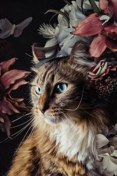 Animals And Pets, Baby Animals, Cute Animals, Cat Wallpaper, Animal Wallpaper, Most Beautiful Animals, Beautiful Cats, Cat Photography, Tier Fotos