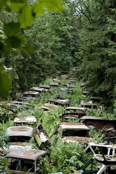 Looks like it's from one of those post-Apocalypse movies. Car graveyard, Ardennes, Belgium - Many American soldiers based on the Western front during World War 2 purchased cars for personal use. When the war ended, they proved too expensive to ship home and many were left abandoned in this eerie graveyard.