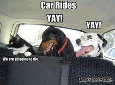 Car Rides - http://dailyfunnypic.com/car-rides/