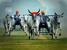 Forget the Olympics—this is a far more exciting alternative! The Kila Raipur Rural Olympics is a rural sports festival that's grown over six decades, to become a three-day event. It is held annually at Kila Raipur, on the outskirts of Ludhiana. Competitors from all over the world participate in the event along with the local farmers.
