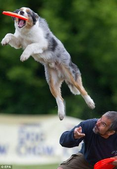 Pictures: Skyhoundz frisbee dog champs