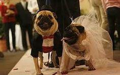 Resultado de imagem para pet wedding